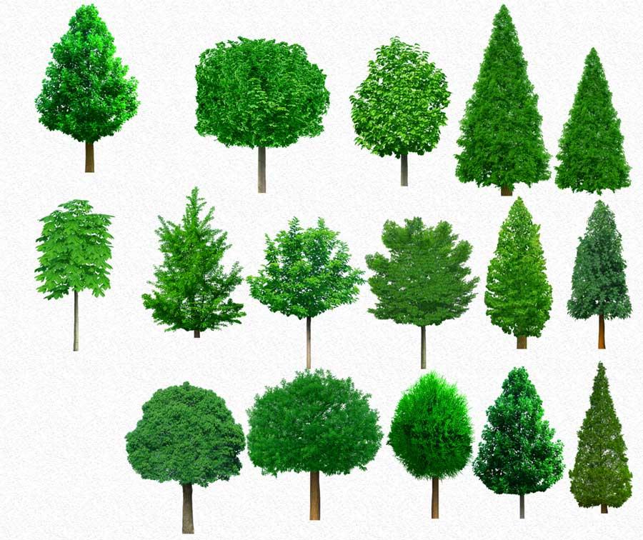 TREE PSD 2