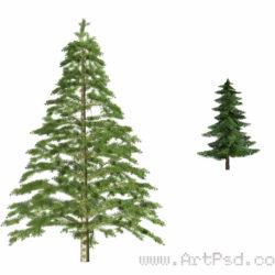 fir tree psd