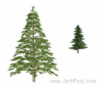 Download Fir Tree PSD